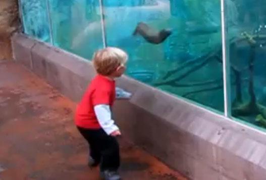Выдра играет с маленьким мальчиком