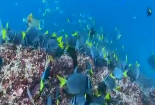 Красота Подводного Мира От Дерека Сепиело