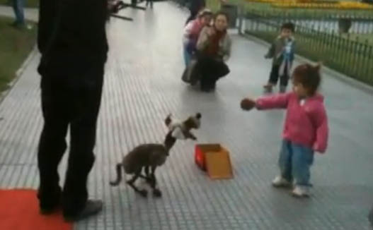 Собака-Марионетка Играет с Ребенком