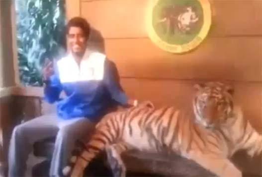 Сфотайте Меня С Тигром